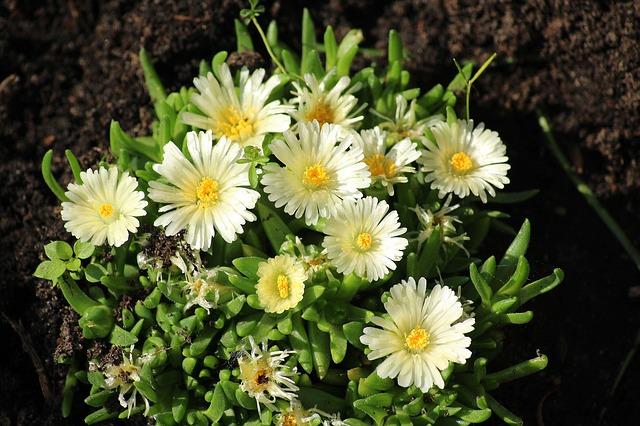 rozkvetlá květina