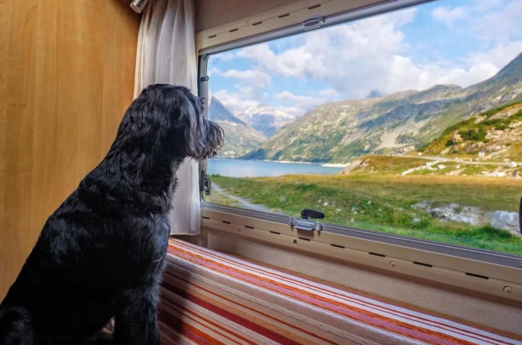 pes a mobilní dům